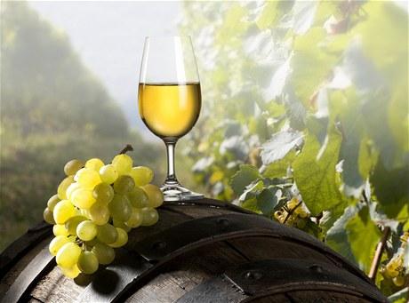 Kvalitní vína | Wineshop.cz