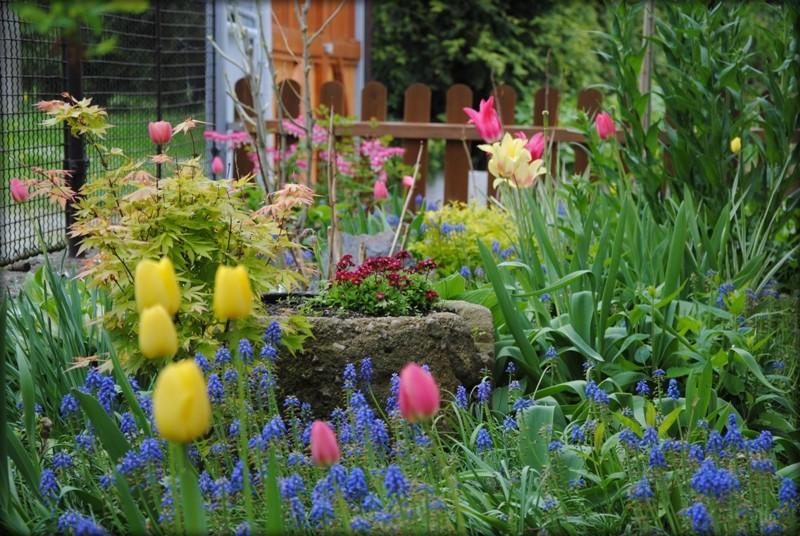 Výsadby v zahradě